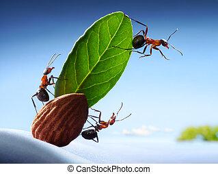 land, mieren, bemanning, jacht, oceaan, in het oog krijgen, teamwork