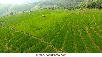 land., montagne, champ riz, agriculture, terrasse