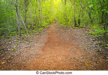 land, rennende , dawn., loofverliezend, door, bos, lente, straat