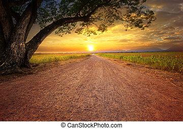 land, scape, von, dustry, straße, in, ländliche szene, und, groß, regen, baum, pflanze