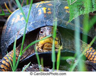 land, sköldpadda