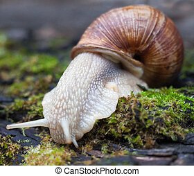 Land snail on the moss.