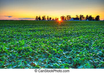 land, solnedgång