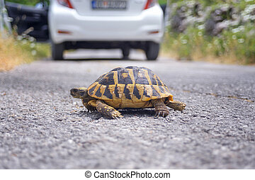 land tortoise on the road