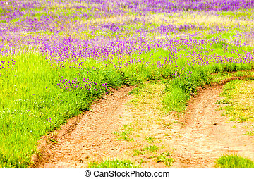 Land With Green Grass And Purple Flowers