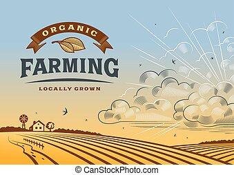 landbouw, organisch, landscape