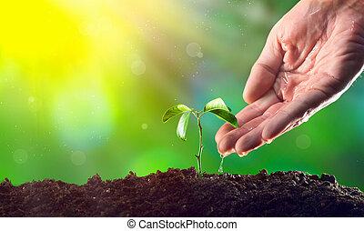 landbouwer, hand, watering, een, jonge, plant., jonge plant, groeiende, in, de, morgen, licht