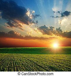landbouwkundig, groen veld, en, ondergaande zon