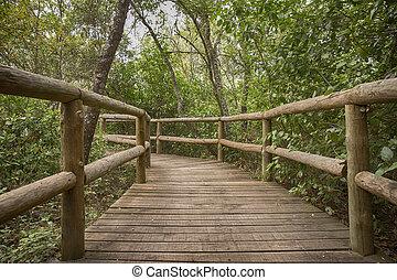 landelijk, houten pad, in, groen park