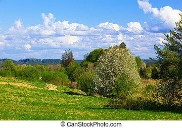 landelijk landschap, lente