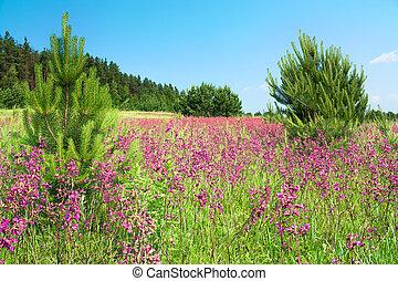 landelijk landschap, met, de, bloeien, rose bloemen, op, een, weide