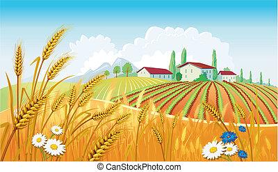 landelijk landschap, met, velden