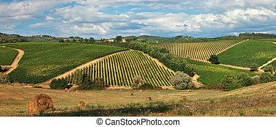 landelijk landschap, met, wijngaarden, op, heuvels, in, tuscany.