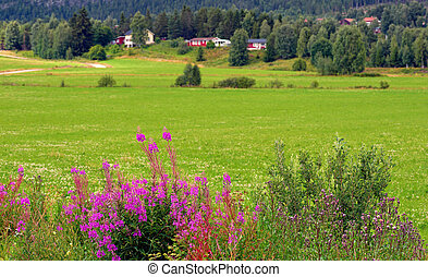 landelijk landschap, scandinavische