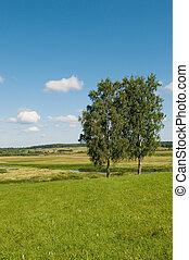 landelijk landschap, twee, bomen