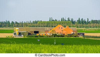 landelijk, stad, zeeland, landschap, boerderij,...