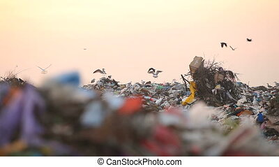 Landfill and birds. Panorama