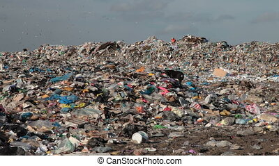landfill - humans and dogs digging in the garbage