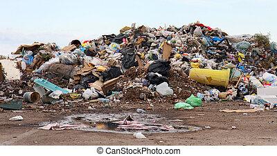 landfill, hunden, vögel