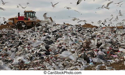 Landfill - Truck moving trash in landfill with birds looking...