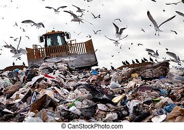 landfill, vögel