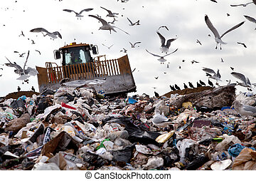 Truck working in landfill with birds in the sky