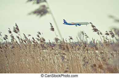 landing plane taken from a field with late autumn grasses