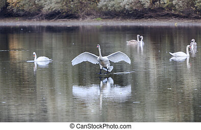 Landing