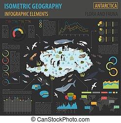 landkarte, isometrisch, flora, elements., tiere, sammlung, vögel, antarktis, eigen, bauen, meer, infographics, life., fauna, 3d, dein, geographie