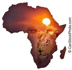 landkarte, tierwelt, afrikanisch