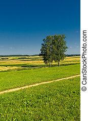 landligt landskab, hos, to, træer