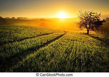 landligt landskab, ind, gylden, lys