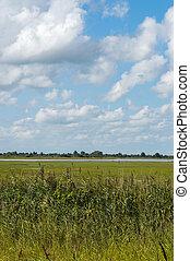 landscape., поля, трава, голландский, сельский, типичный