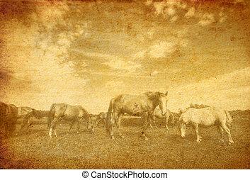 Landscape and horses on vintage grunge paper