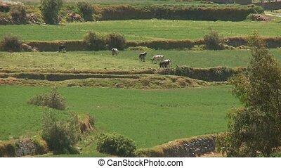 Landscape, Andes, Peru, near Arequipa