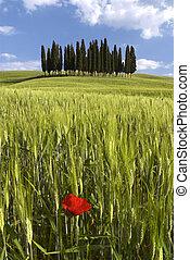 Landscape around Siena called Crete Senesi Siena Tuscany...