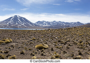 Landscape at Miscanti lake