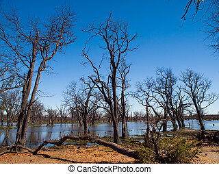 Landscape at Okavango river