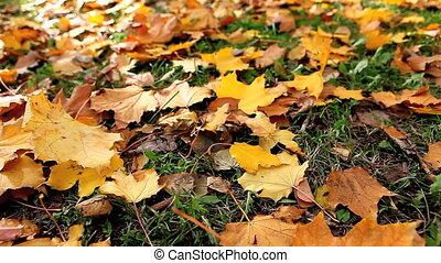 Landscape - Autumnal landscape: yellow leaves lying on land