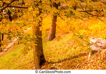 Landscape during the autumn in a forest