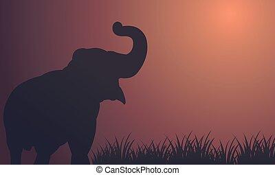 Landscape elephant in fields silhouettes