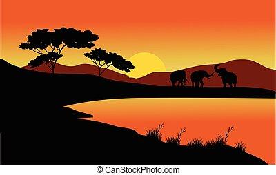 Landscape elephant of silhouette