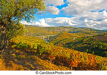 Extensive Vineyards on the Hills of Portugal