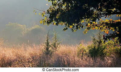 Landscape - Foggy morning in spring meadow. Sunrise in river valley.