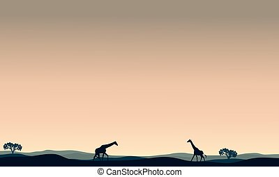 Landscape giraffe at afternoon