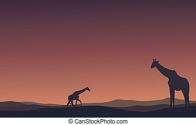 Landscape Giraffe at morning silhouettes