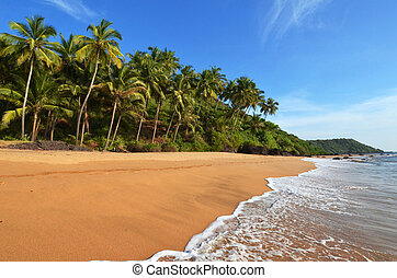 landscape goa - Photo beautiful landscape of palm trees and...