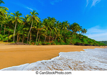 landscape goa - beautiful landscape beach in Goa in India
