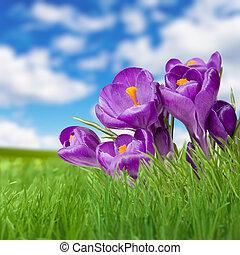 Landscape grass sky and violet fliower