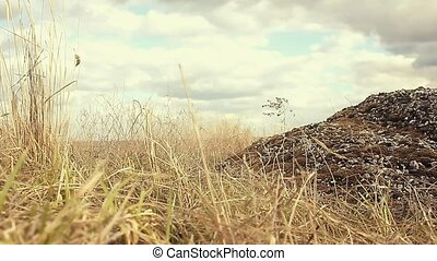 landscape gravel, stone dry grass sways in wind nature...